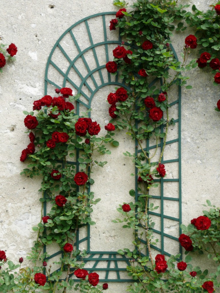 Rose inspiration from Loire Valley