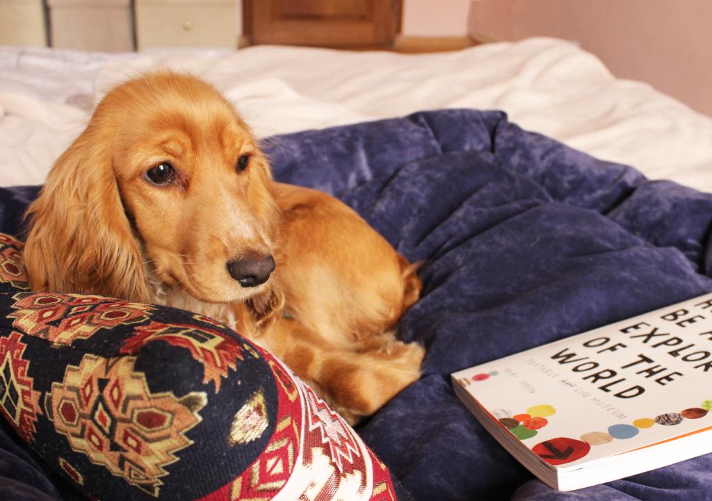 DIY Project: A Cozy Dog Bed