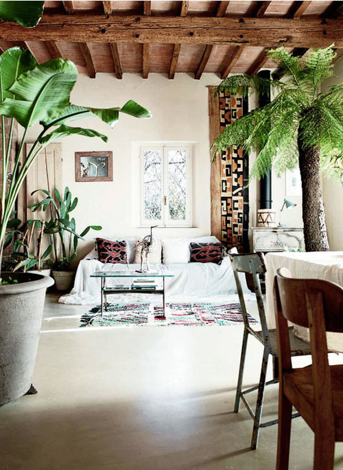 Green extravaganza plants in home decor for Planta tropical interior