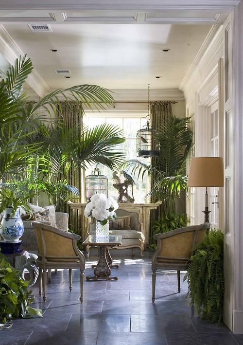 Green Extravaganza Plants In Home Decor