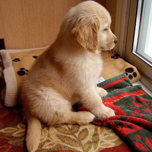 puppy 2