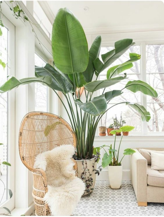 Home Decorating with Plants