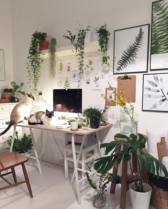 Decorating Dilemma House Plants: Home Decorating With Plants