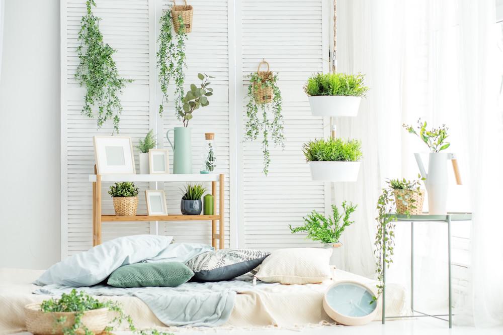 Importance Of Plants Indoors 5 Essential Benefits Of Indoor Plants